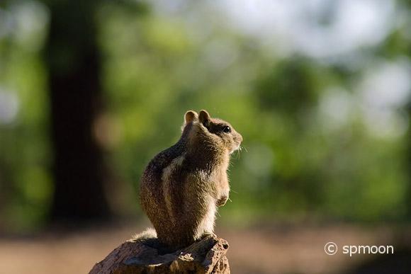 Squirrel at Grand Canyon North Rim