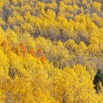 Autumn in Santa Fe(秋のサンタフェ)