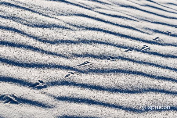 Lizard Tracks on White Sand Dunes