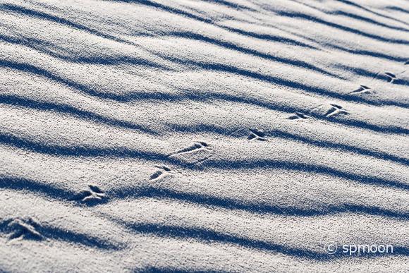 Lizard Tracks on White Sand Dunes