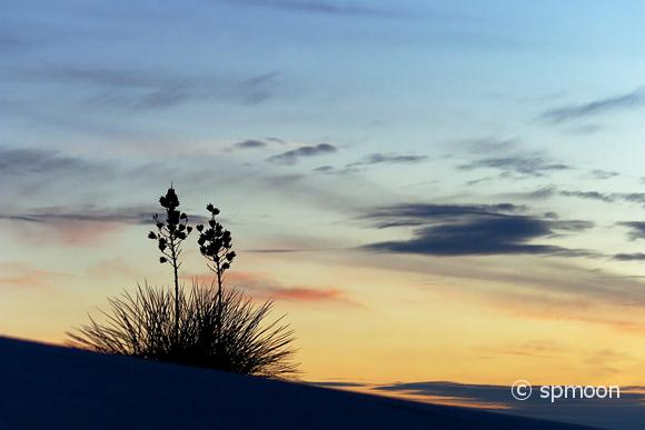 Yucca at Sunset, White Sands NM