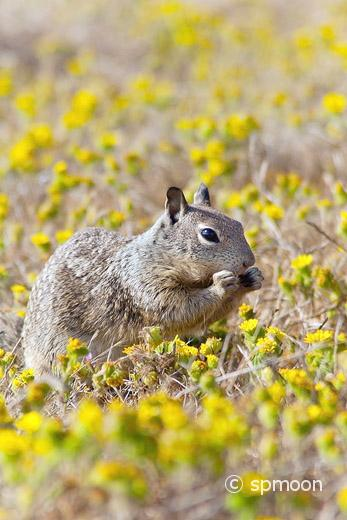 Squirrel and Wildflower