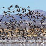 Wilcox Playa Wildlife Area(ウィルコックスプラヤ)