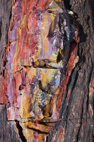 Colorful petrified wood at Petrified Forest National Park, Arizona