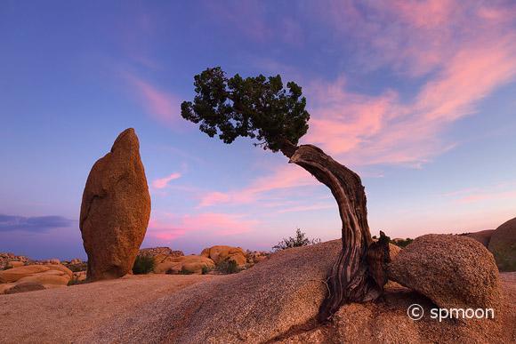 Juniper Tree and Balance Rock in Twilight, Joshua Tree National Park, CA
