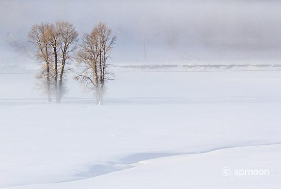Winter landscape with trees in foggy morning, Yellowstone National Park.
