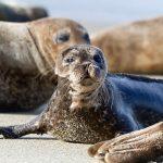 Seal & Sea Lion(アシカとアザラシ)