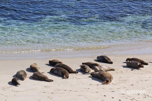 Seals in La Jolla, Sandiego, CA.