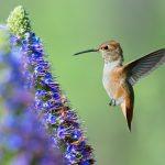 Hummingbird(ハチドリの撮影)