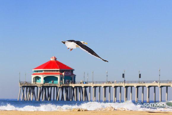 Sea Gull flying in Huntington Beach Pier, CA