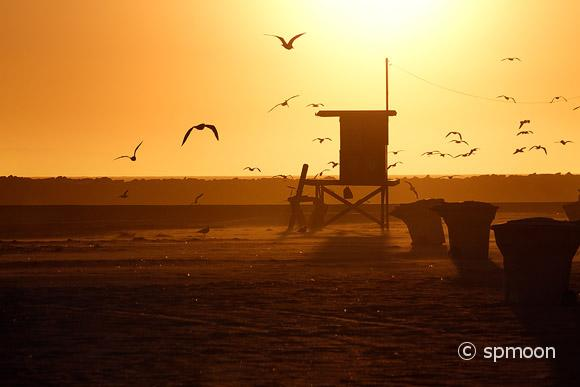 Lifeguard Tower and Sea Gull in Sunset, Corona Del Mar Beach, California.