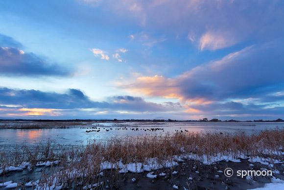 Birds on the frozen pond at sunrise, Bosque Del Apache National Wildlife Refuge, New Mexico