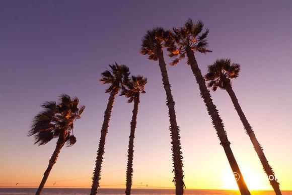 Palm tree silhouette at sunset, Huntington Beach, CA