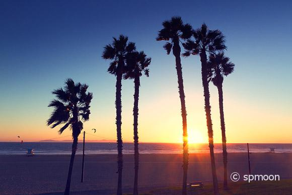 Palm tree silhouette at sunset with vintage effect, Huntington Beach, CA