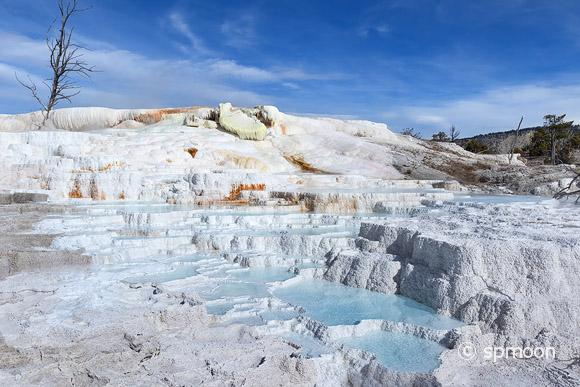 Upper Terrance Area at Mammoth Hot Springs, Yellowstone National Park